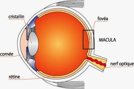 comment-avoir-des-yeux-sain