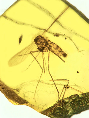 Ancestral malarial organisms traced to age of dinosaurs