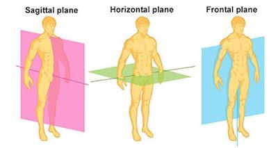 Arrow plane Coronal level Horizontal plane