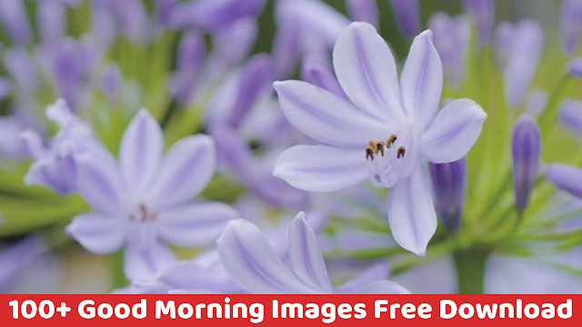 100+ Good Morning Flowers Images, Quotes, Wallpaper, GIF, Greeting Cards Free Download