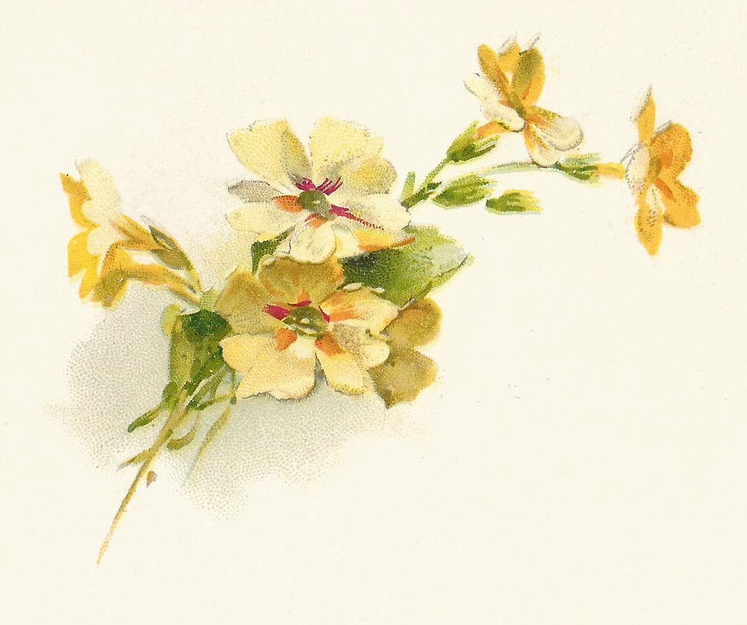 Antique Images Free Flower Clip Art 2 Yellow Flower Decorative