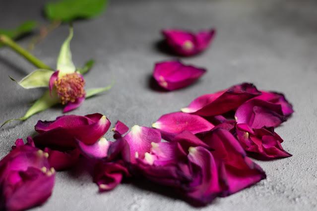 Rosa vermelha, murcha e despedaçada
