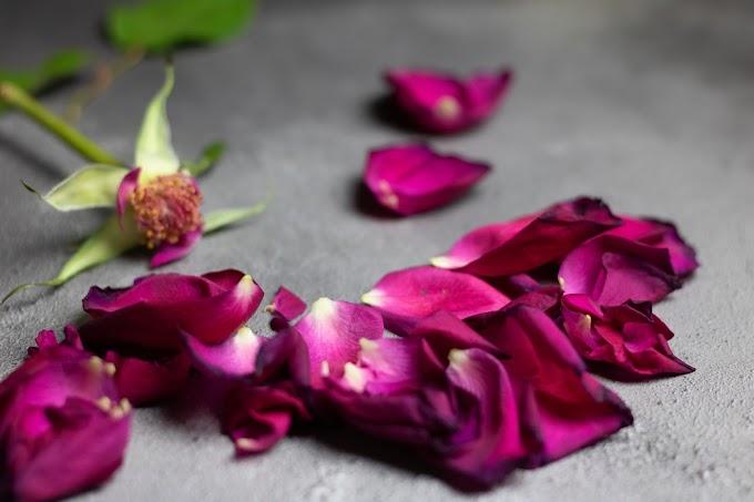 Como a pandemia afeta o equilíbrio emocional