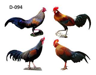 ayam hutan merah dan hijau nenek moyang ayam kampung indonesia