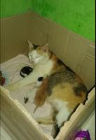 inilah cara membantu kucing melahirkan anaknya
