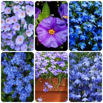 Co siać w maju w ogrodzie? Krótkie DIY o tym co robić z rozsadą i pozostałymi nam nasionami warzyw i kwiatów, które się nie doczekały jeszcze swojej kolejki siania.