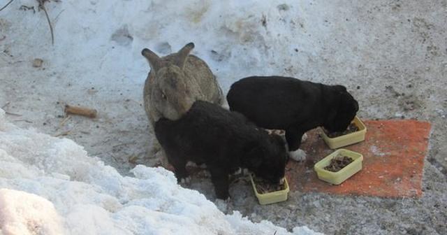 Этот ушастый товарищ доказал, что кролик — это не только ценный мех, но и героический спасатель для щенков
