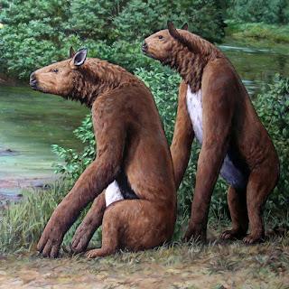 Il Calicoterio, buffo mammifero preistorico