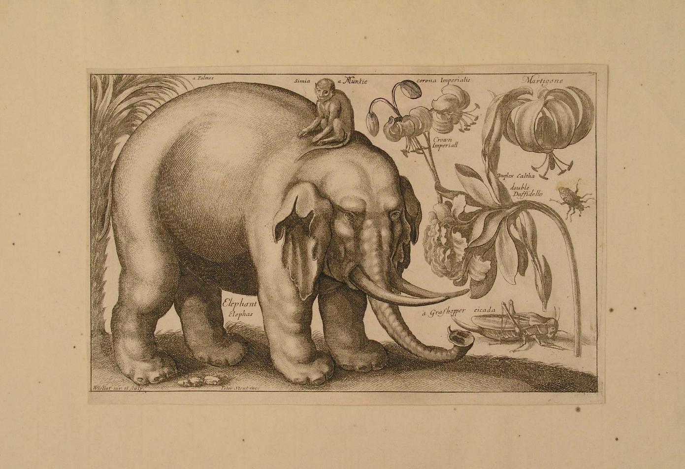 Ilustración de elefante y flores