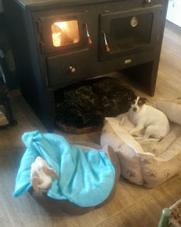 Later on, snuggled by the fire