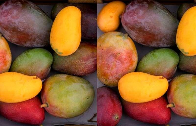 Jenis Mangga Manis di Indonesia (jurassicfruit.com)