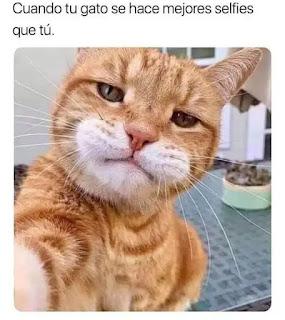 Foto de gato que parece que se hace un selfie