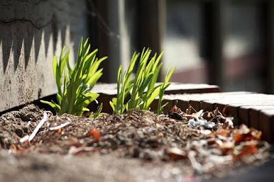 aiuole-giardino-piante-arredo giardino
