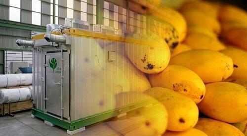 Try Heat for Fruit Ripening - Muddlex