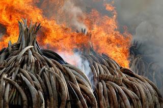 rhinoceros-horn-burn