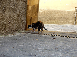 サレルノで見つけた猫