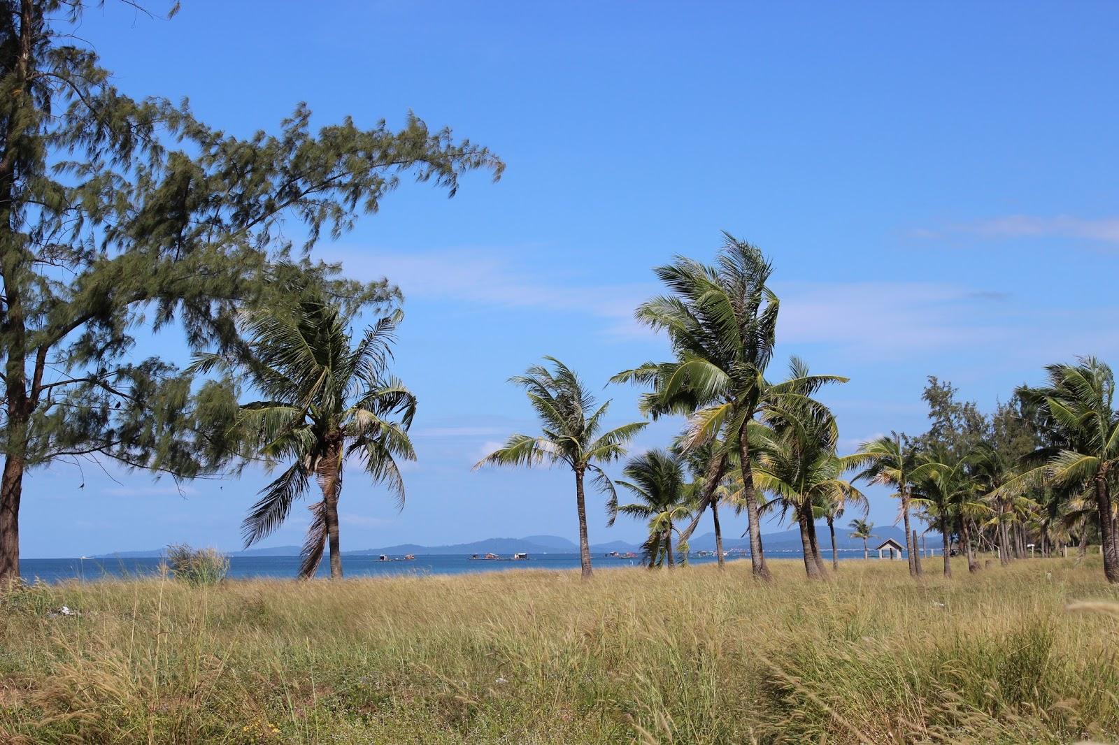 Phu Quoc palm trees