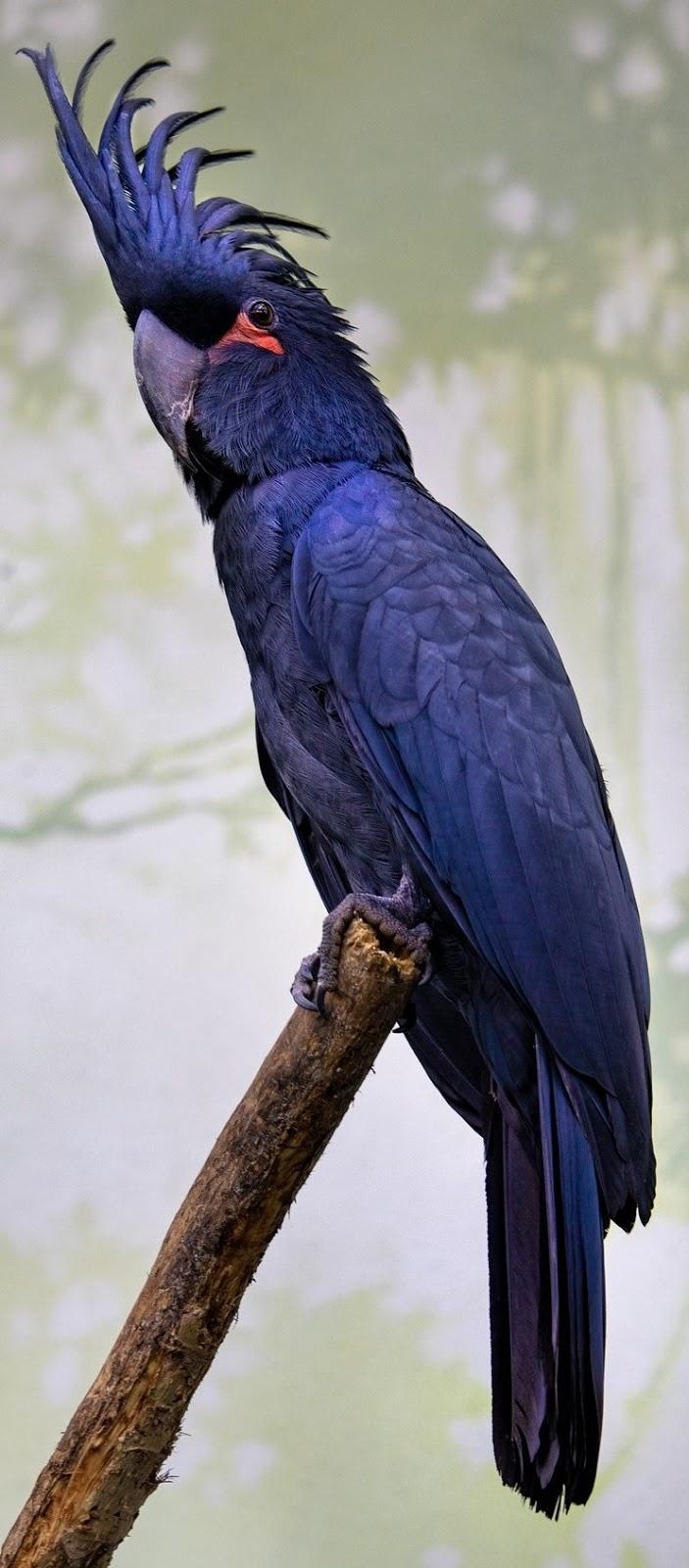 Beautiful exotic parrot.