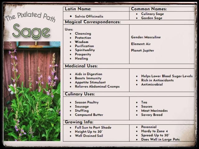 Information Chart with some of the uses and correspondences of Sage (salvia officinalis)