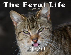 The Feral Life 2020 Cat Calendar, from Zazzle