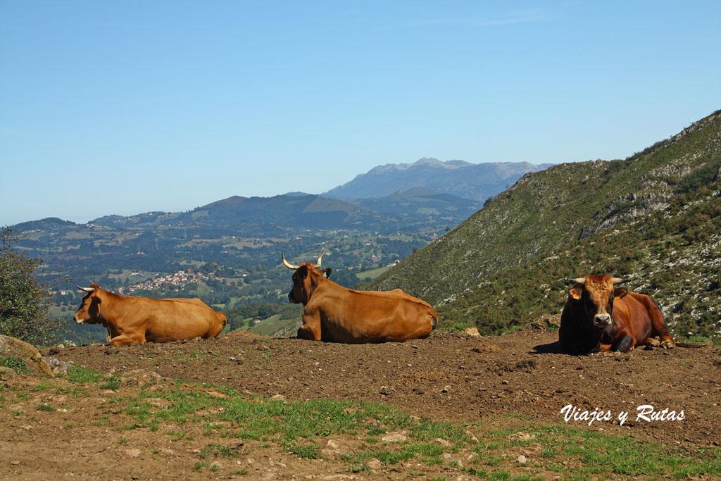 Foces del río Pendón, Asturias