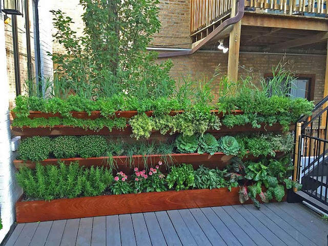 Build a kitchen garden with healthy, organic ingredients for your family