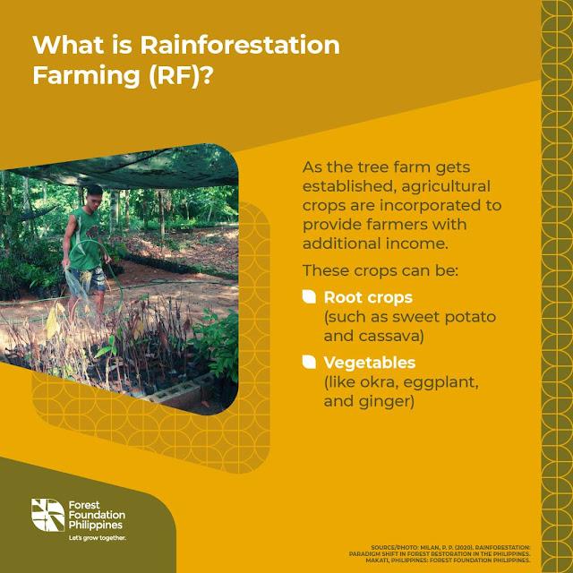 Rainforestation Farming infographics