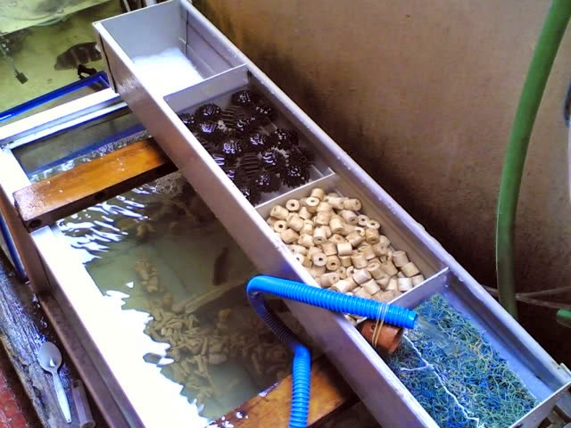 Membuat Filter Atas untuk Akuarium  Akuarium Ikan Hias
