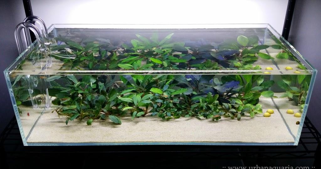 Urban Aquaria 32 Litre Quot Bucephalandra Garden Quot Tank