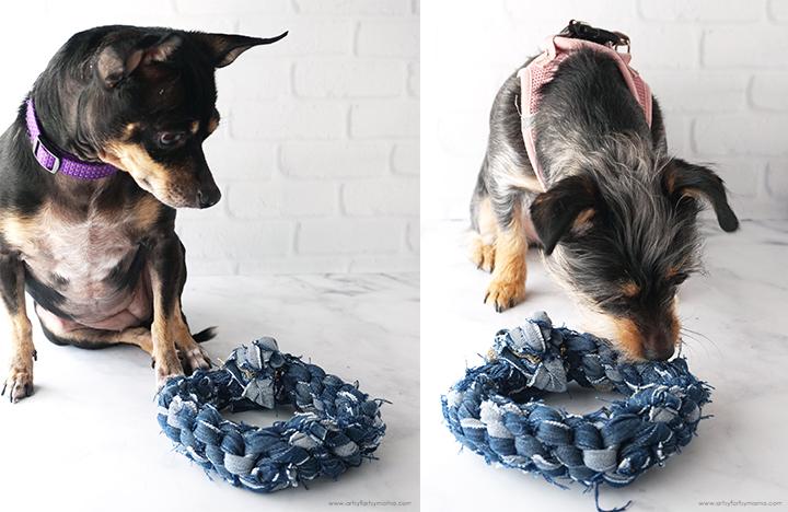 Dogs with No-Sew Denim Dog Toy