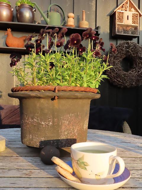 Sommerens kjeks laget med lavendelsukker - den kan nytes med en kopp te i hagen