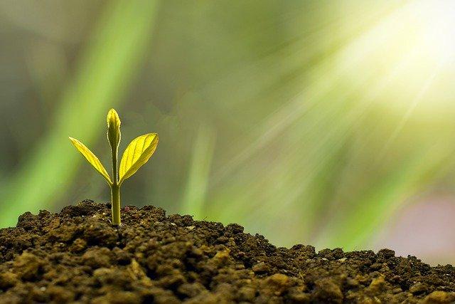 padrao crescimento igreja