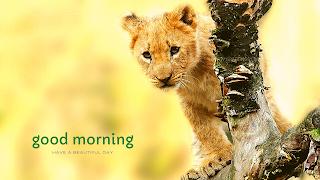good morning lion animal greetings