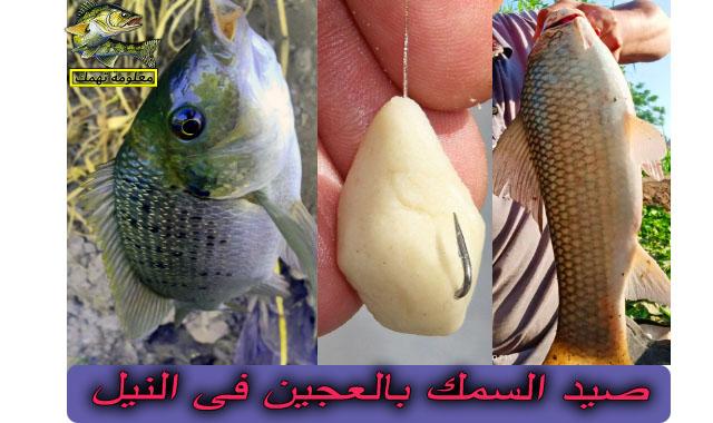 طريقة صيد السمك بالعجين و تحضير عجينة الصيد