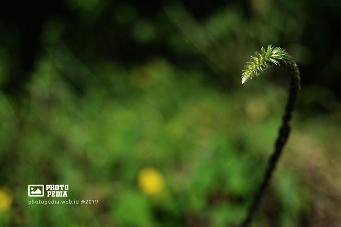 Hasil Foto Bokeh  Lensa Kit 18-55mm