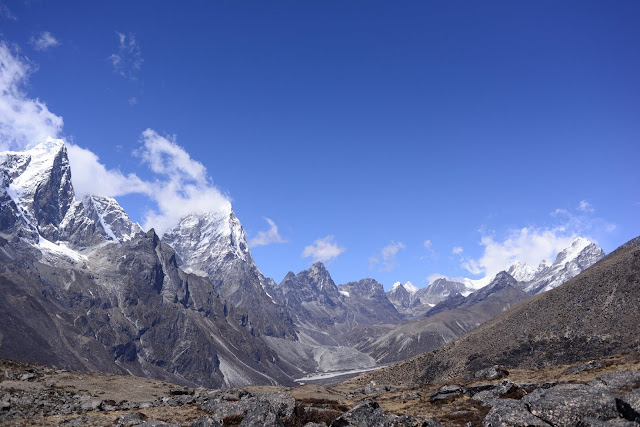 Plant life expanding in the Everest region