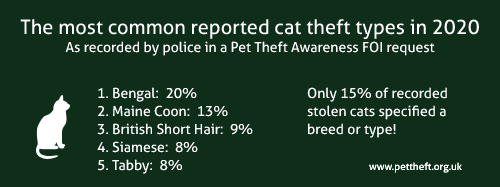 The most common stolen cats types