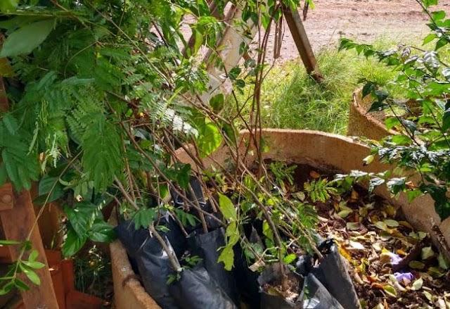 Agricultores de Taquarituba recebem mudas de árvores nativas através da Coordenadoria de Agricultura, Abastecimento e Meio Ambiente