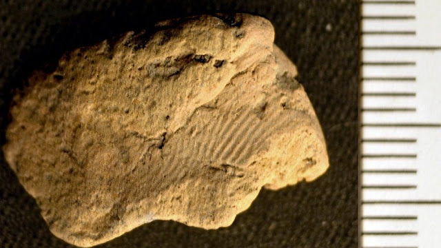 5,000-year-old potter's fingerprint found in Orkney