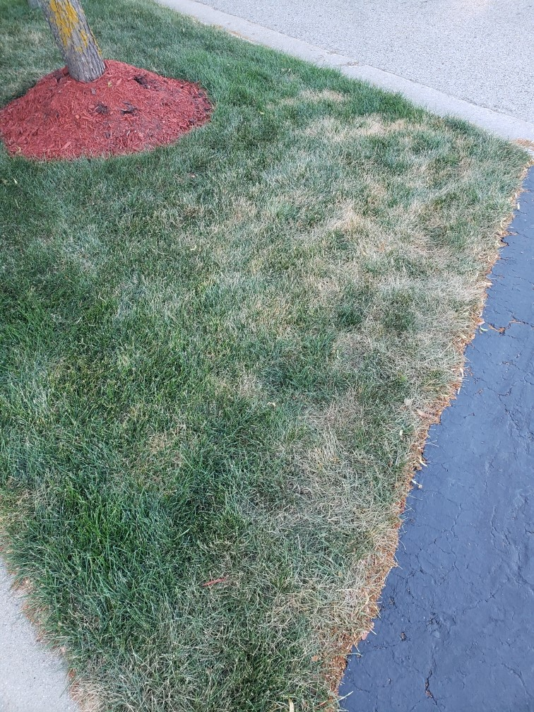 Lawn*Doctor Lawn Care Insights