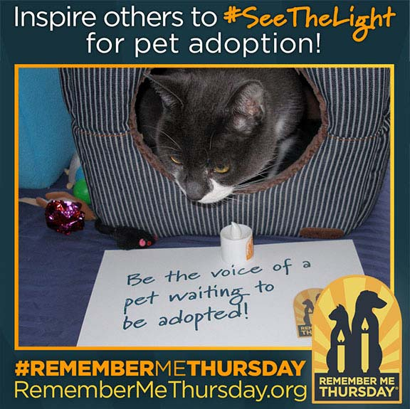 Remember Me Thursday: Saving/Rehoming Maria's Cats
