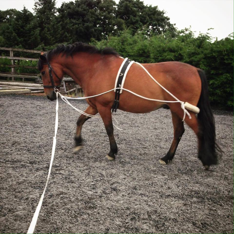10 Barn Hacks That You Need To Know Part 2 The Rider S