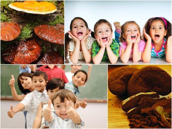 Cách dùng nấm linh chi đỏ với trẻ em hiệu quả