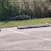 Jacaré assusta clientes em estacionamento de lanchonete; veja vídeo