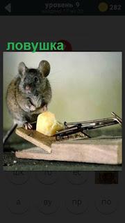 275 слов сидит мышка около ловушки и смотрит на сыр 9 уровень