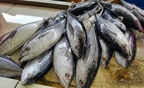 Cara Penanganan Ikan Yang Baik( CPIB )