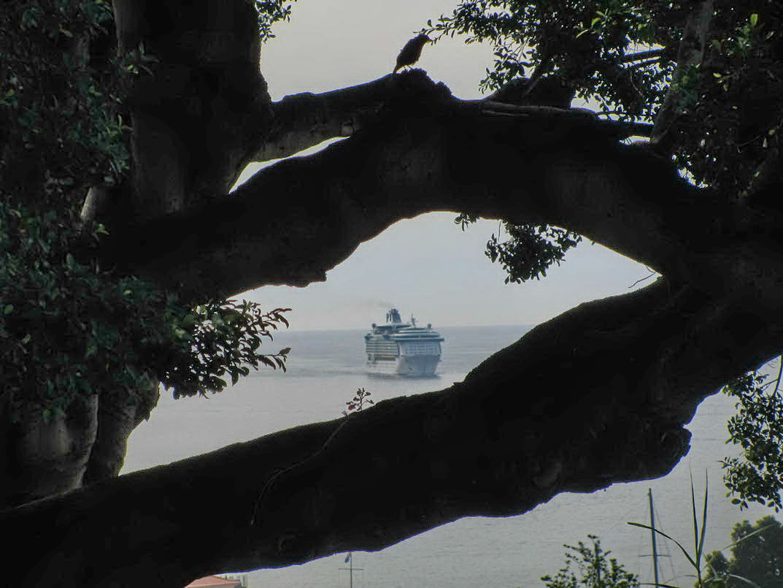 Splendour in the tree
