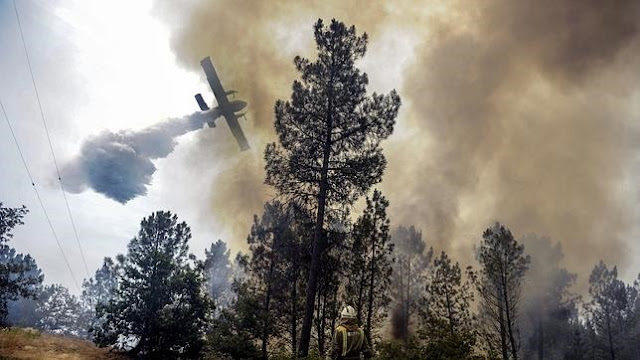 El problema ambiental de los incendios forestales