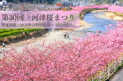 Kawazuzakura-Matsuri