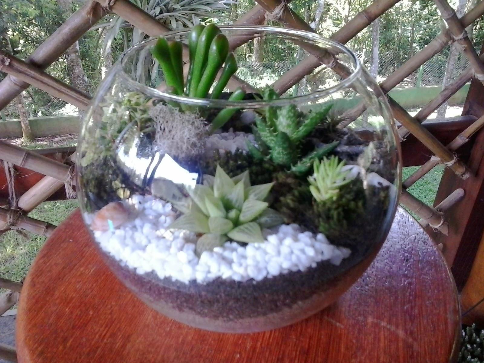 Tipos de plantas para terrario v rias - Plantas para terrarios ...